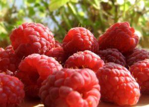 RDM Red Raspberries - IQF frozen fruits, IQF frozen vegetables distributor