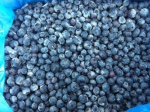 iqf organic blueberries - frozen cultivated distributor