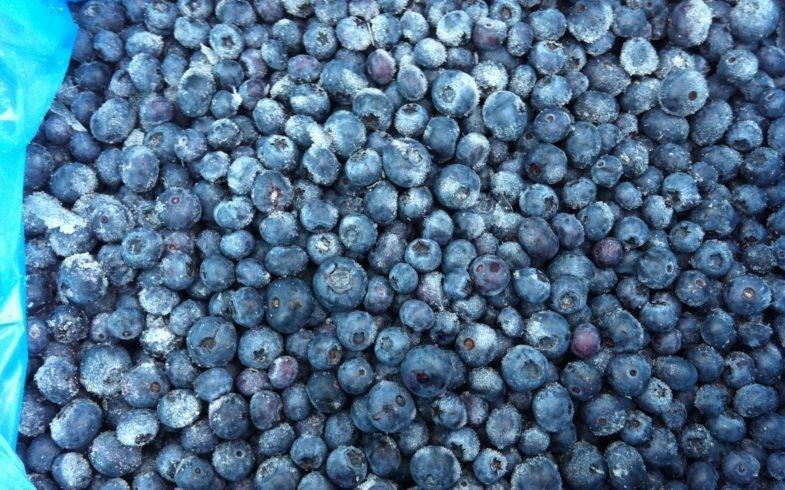 Buying Wholesale Frozen Wild IQF Blueberries