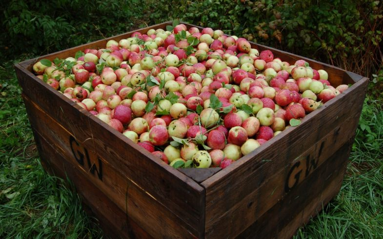 Wholesale Conventional & Organic IQF Apples Distributor