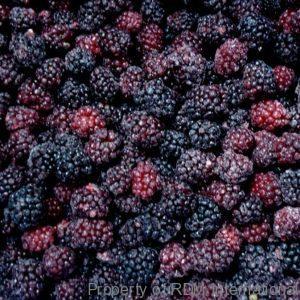 Bulk Organic Wholesale IQF Blackberries Distributor