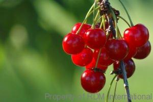 Frozen IQF Red Tart Cherries Distributor