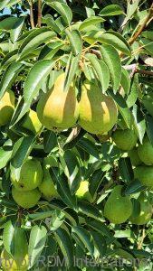 Conventional & Organic Wholesale Fruit Wholesale Vegetables wholesale fruit